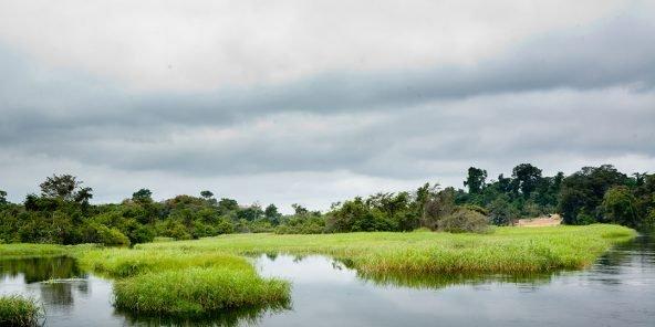 Green Congo : Les tourbières congolaises, une arme fatale (2/3)